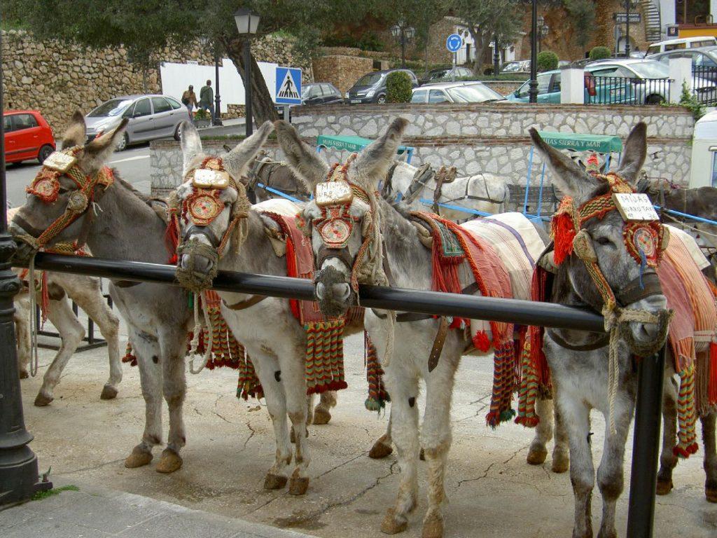 mijas burro-taxi